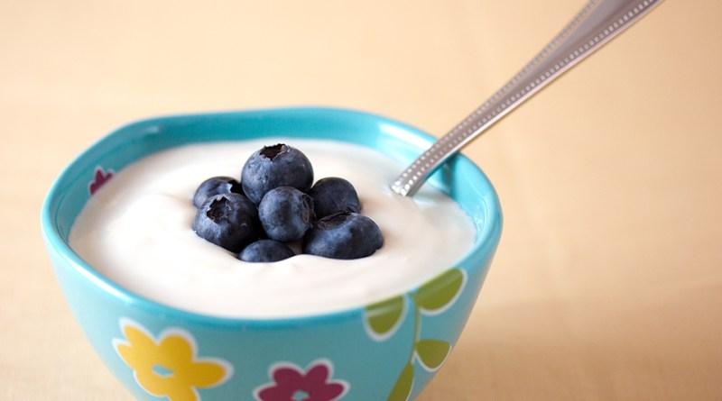 yogurtbacteria-mhv2