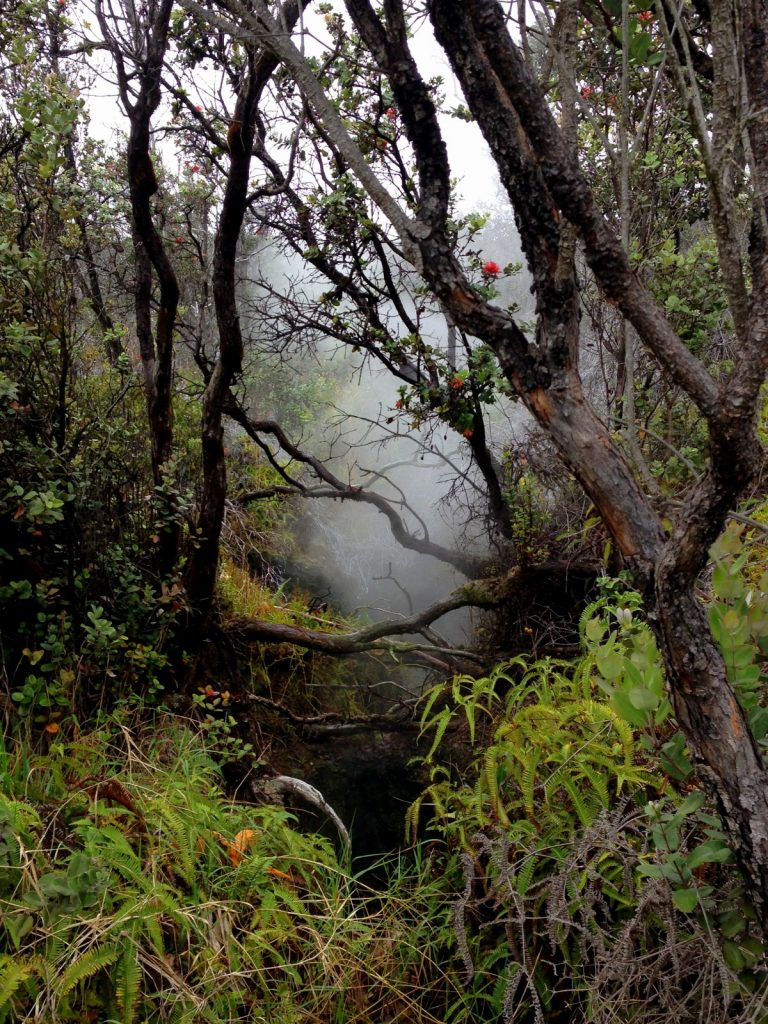 Hawaii Volcanoes National Park, The Big Island