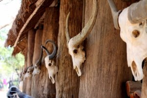 Animal skulls at the Black House, Chiang Rai