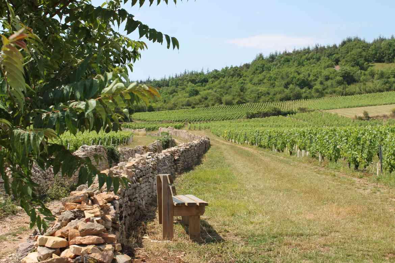 Vignes de la Côte Chalonnaise