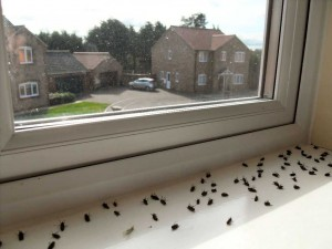 Dead flies in the window - Marc Frank Montoya dot com