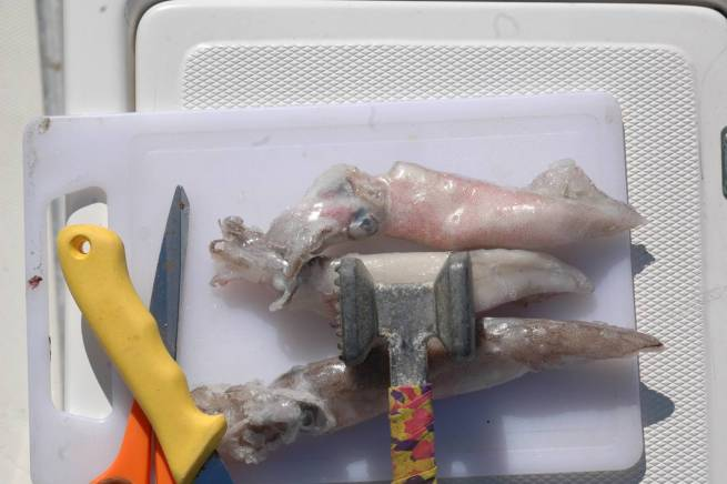 Il calamaro prima di essere innescato va pulito e battuto. Successivamente tagliato a stricioline