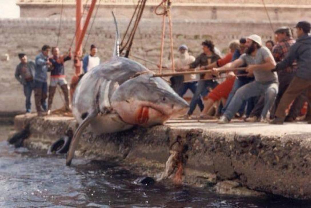 """da""""il giornale dei marinai""""lo squalo di Favignana 08 maggio 1987"""