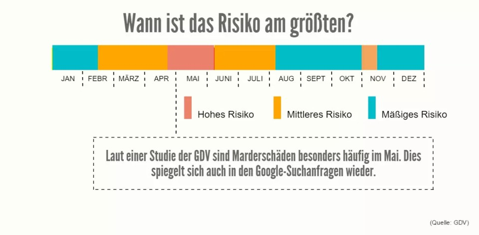 Marderschadenrisiko im Mai: Studien, Zahlen, Statistiken - infografik