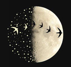 Lua Corcunda - Isnogoodgood.tumblr - Reprodução