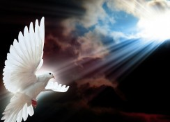 white-dove-message-244x176-custom