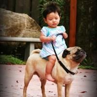 Un bébé asiatique assis sur un chien à l'air fier