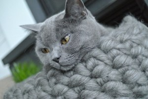 Katze Mio im mariemeers Korb