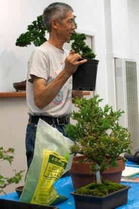 Randall Lee introduces Hinoki Cypress