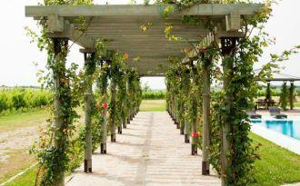 Crama Avincis | descopera povestea unui vin bun