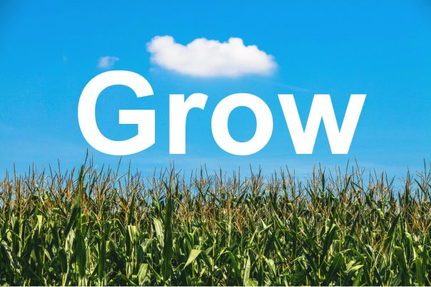 Grow - Cornfield blue sky (1)