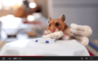 A hamster eating a tiny burrito