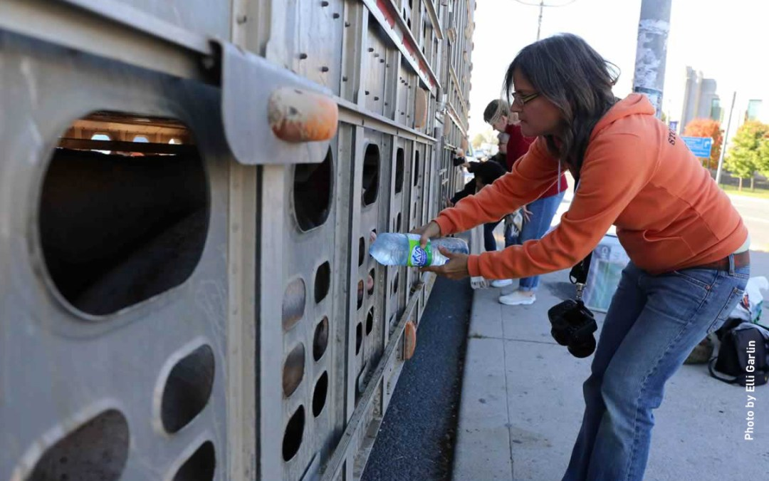 Compassion Wins: An Interview with Anita Krajnc of Toronto Pig Save