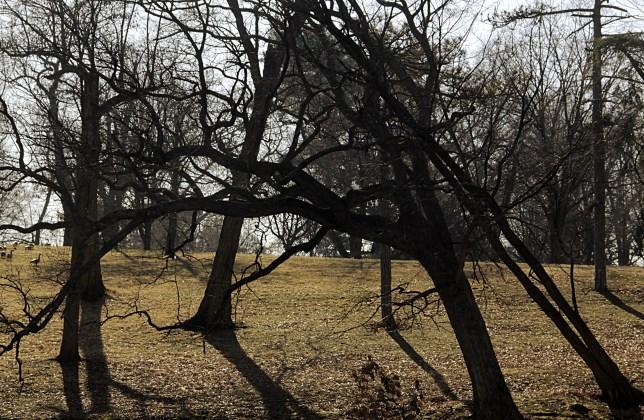 Crossed Trees, February 2016