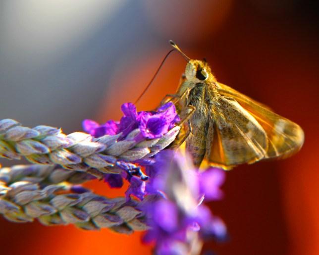 moth-october-2016