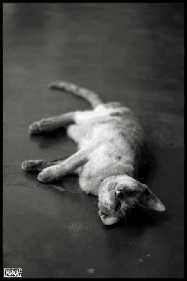 Maroh---Madagascar-2015---Dead-cat