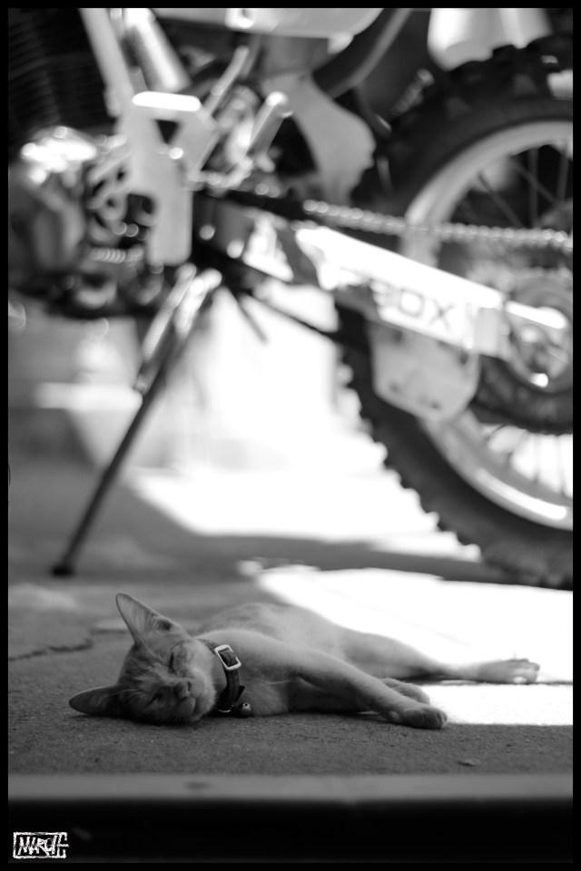 Maroh---Madagascar-2015-dead-cat