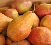 good pears make good hard cider
