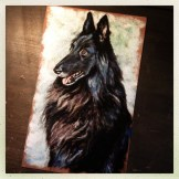 Belgian Sheepdog, 9x15 pastel commission