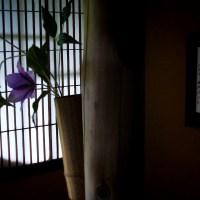 364 大橋家庭園 陰影