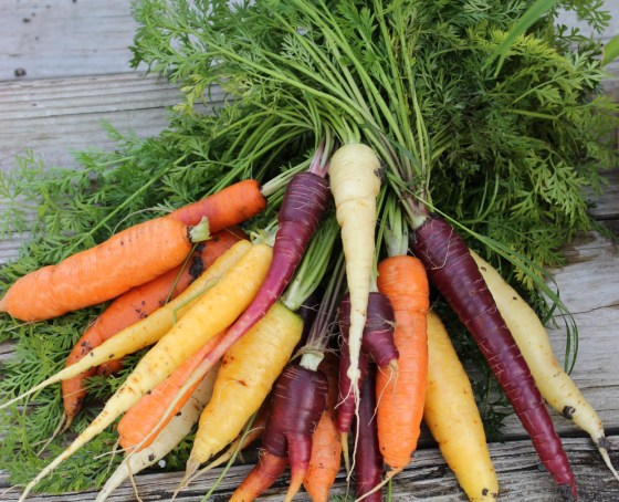 It's not too late to plant root crops like carrots and beets from seed