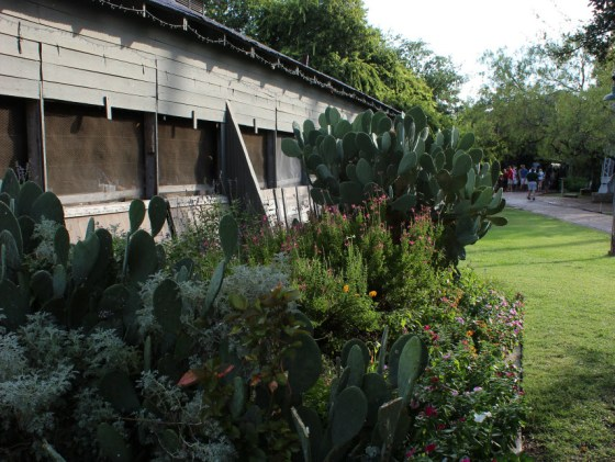 No plant says Texas better than cactus and no building says dancehall better than Gruene Hall