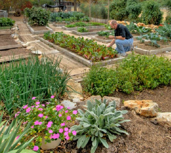 home-vegetable-garden