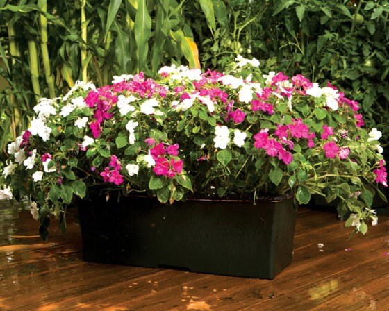 EarthBox is not just for vegetables.  These self contained gardens grow beautiful flowers as well