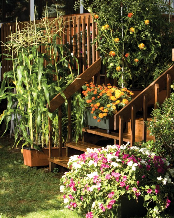 Group several containers together to create a beautiful back porch landscape.