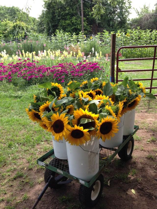 market-sunflowers