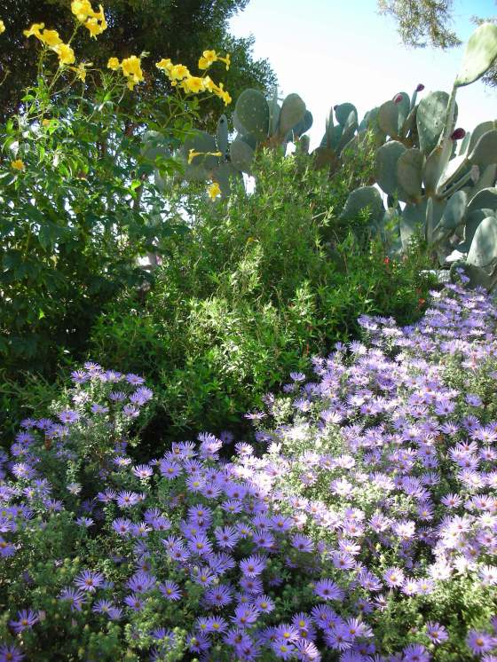 fall-asters
