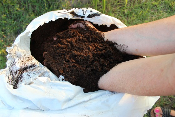 Now is the time to spend money on compost.  Everything in your Fall garden will benefit from the addition of compost
