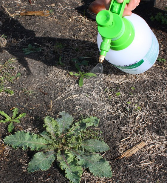 acetic-acid-weed-spray
