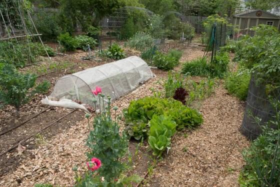 Patty-Leander-Spring-Garden