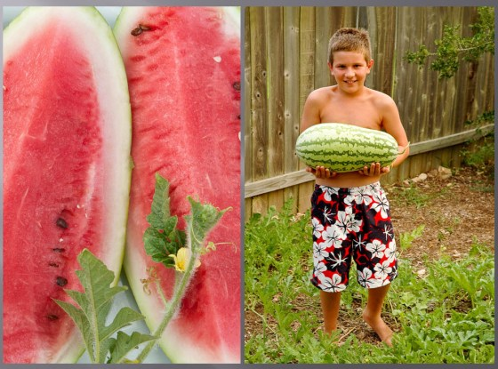 watermelon-boy