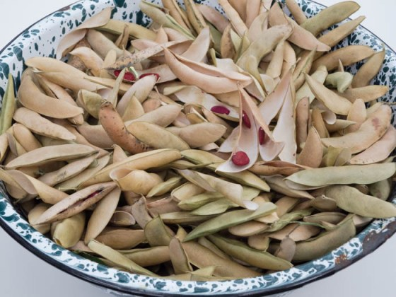 dried-butter-bean-pods