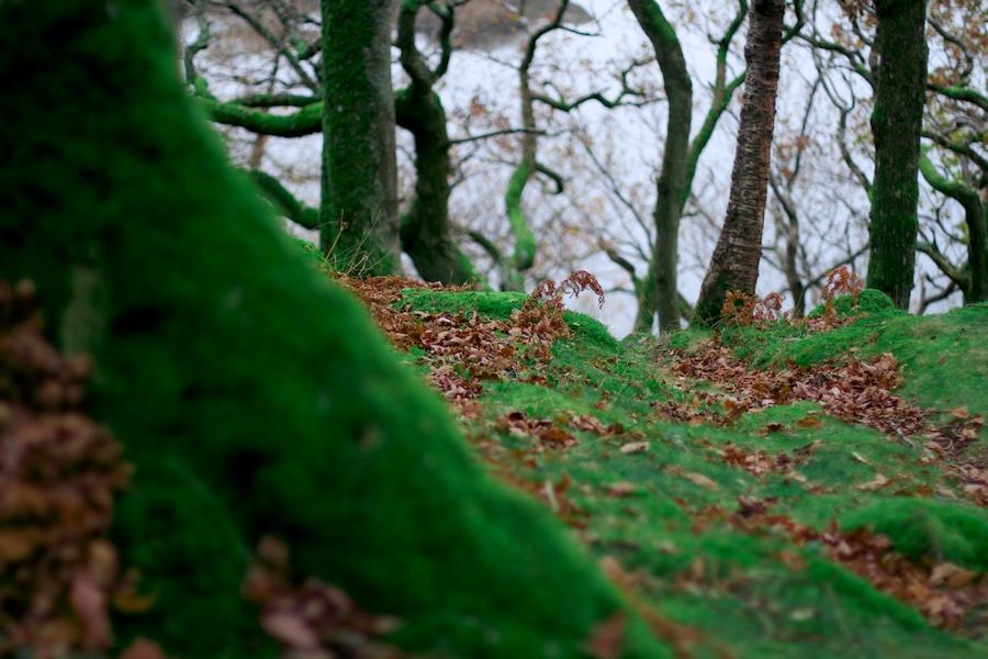 matias-ventura-forest-in-keswick