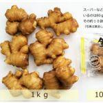 【月曜から夜ふかし】マツコに黄金生姜(高知県産)を食べさせてあげたい!普通の生姜と何が違う?