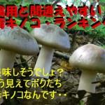 【食べると危険】食用と間違えやすい毒キノコの食中毒件数ランキング