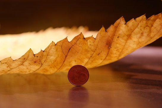 コインと葉っぱ