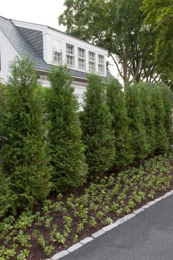 Majestic Design Evergreen Landscaping Chino Ca Design 16 Matw Cunningham Landscape Design Lockwood Road Evergreen Landscape