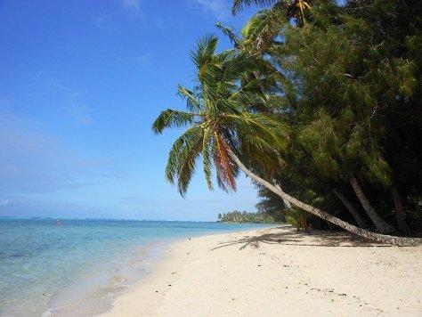 palmtreeoverlagoon_cookislands