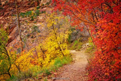 Fall-Colors-of-Zion-1400