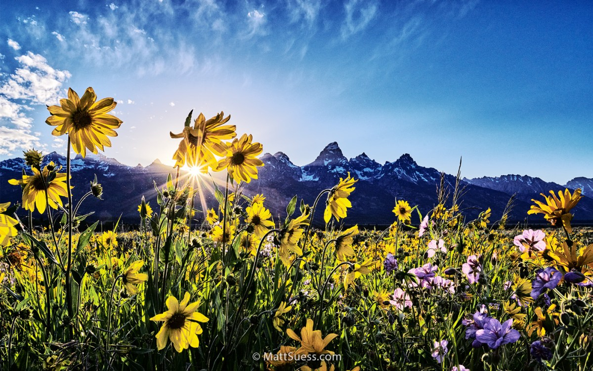 2016 Grand Teton National Park Spring Photo Workshop