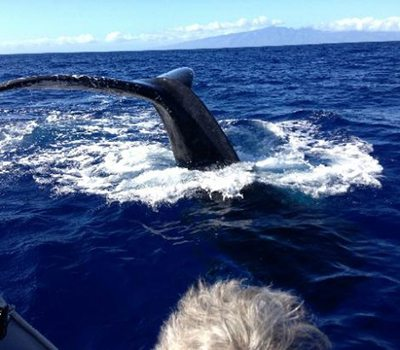 Whale Watch with Hawaiian Ocean Rafting | Watching humpback whale's fluke