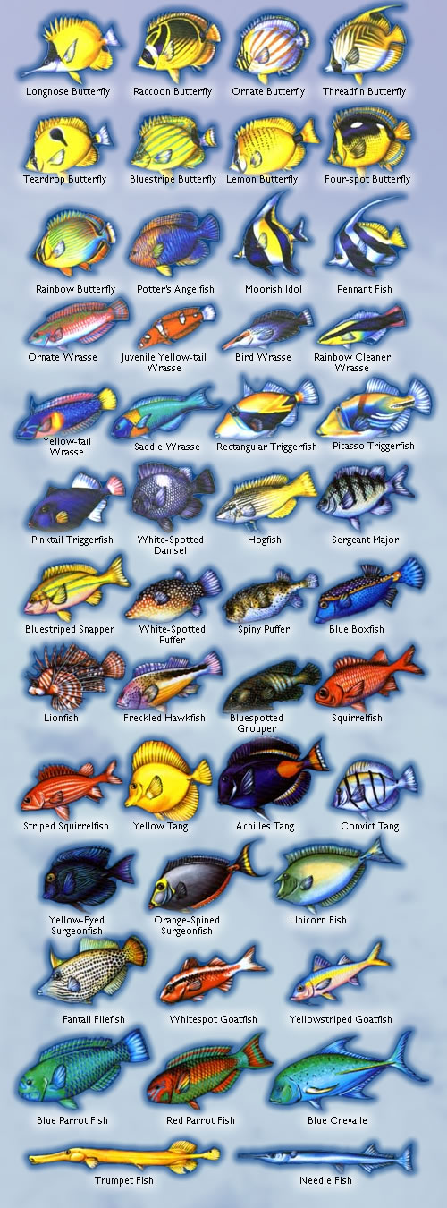 Tropical Fish Pictures And Names x3cbx3efishx3c/bx3e guide   maui