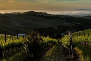 A view from Daou Vineyards at sunrise looking towards the valley in Paso Robles, Calif. on April 28th, 2015.