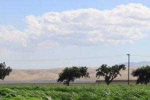 Trees and Clouds in Los Banos Sliderbox