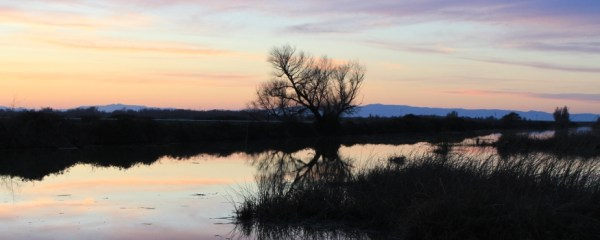 Sunset in the Delta sliderbox