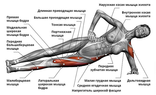 Мышцы задействованные при выполнении боковой планки